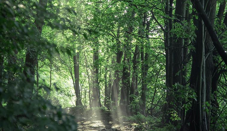 Roztoczański las jako element grafik przygotowywanych przez MDI dla Rodowita.